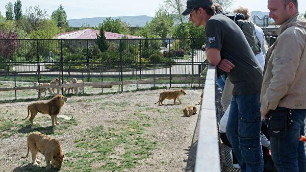 """В Крыму устранят нарушения в парке львов """"Тайган"""", сообщили в МЭР"""