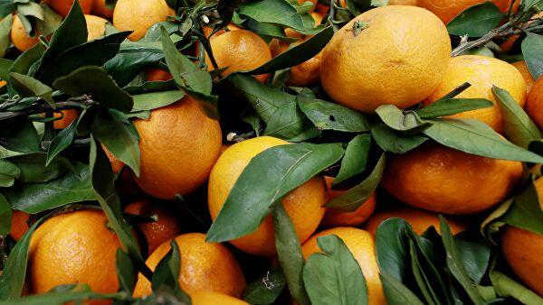 Диетолог объяснила, почему не стоит есть мандарины на голодный желудок