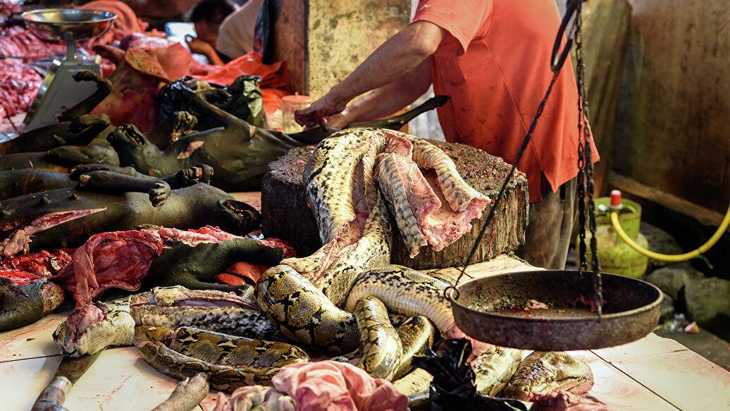 Китайцы снова едят летучих мышей