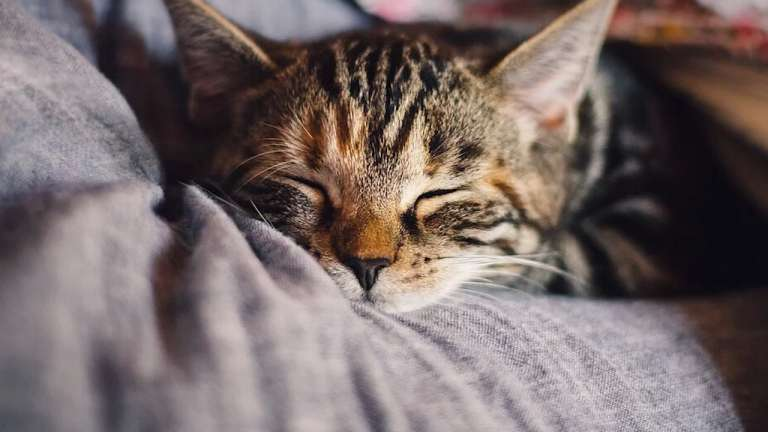 Что делают нейроны пока вы спите?