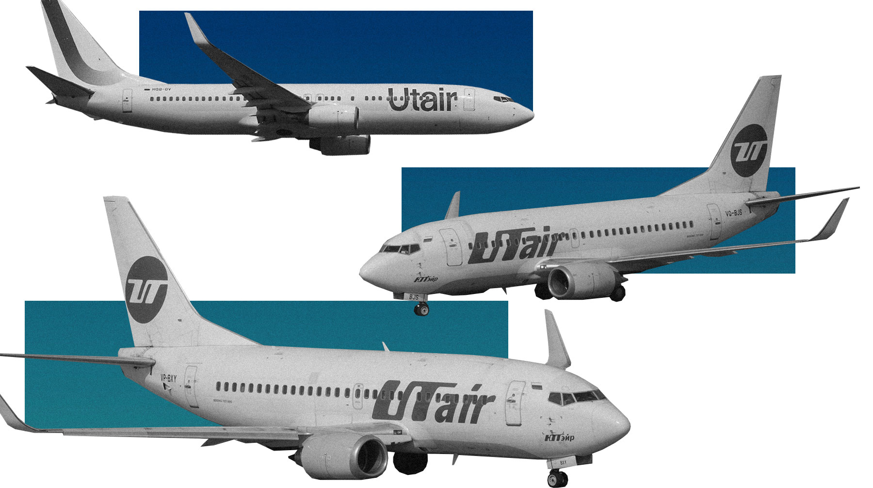 Utair разрешил перевозить в салоне самолета до 10 животных одновременно