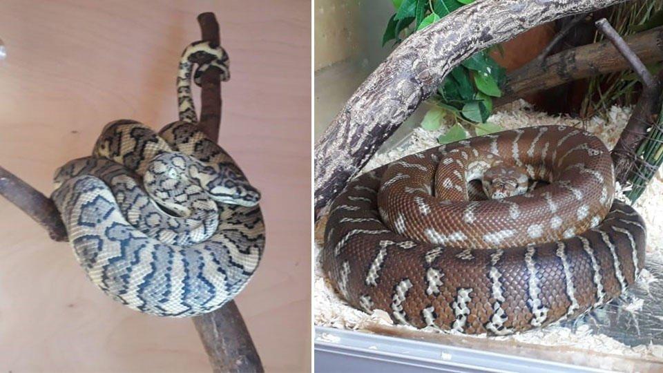 Из квартиры краснодарца изъяли 16 змей
