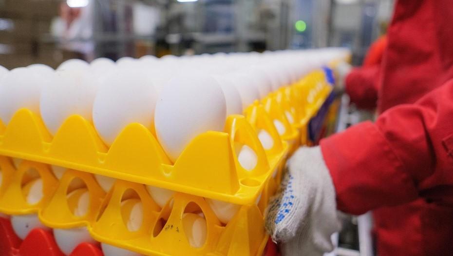 Через петербургский порт в ОАЭ отправили 1,2 млн яиц из Ленобласти