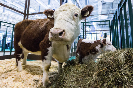 Освобождение от НДС на ввоз племенного скота могут продлить до конца 2025 года
