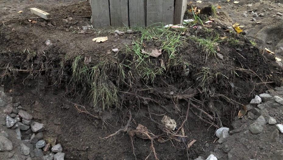 Петербуржцы пожаловались на вырубку корней деревьев в центре города