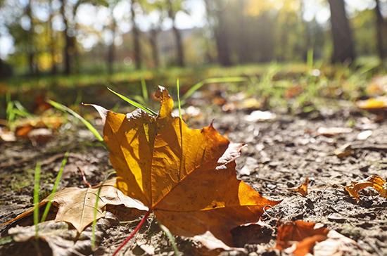 Синоптики пообещали москвичам тёплую погоду до конца октября