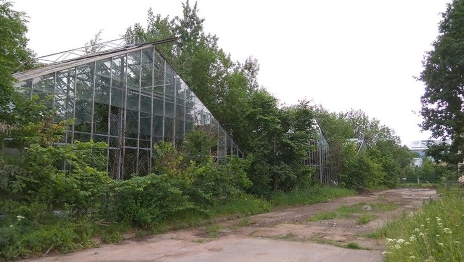 Смольный одобрил реконструкцию оранжерей Таврического сада