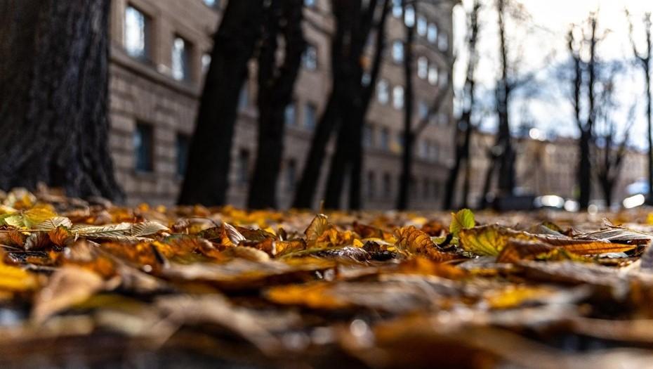 В Петербурге в пятницу ждут дожди и аномальное тепло