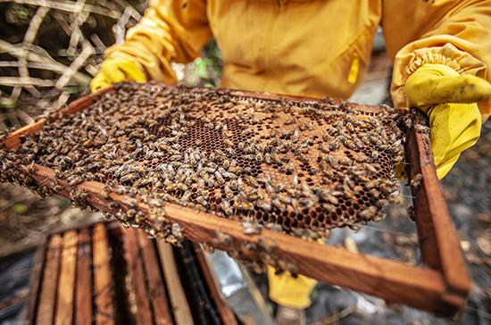 В законодательстве предлагают поддерживать пчеловодство как отдельную отрасль