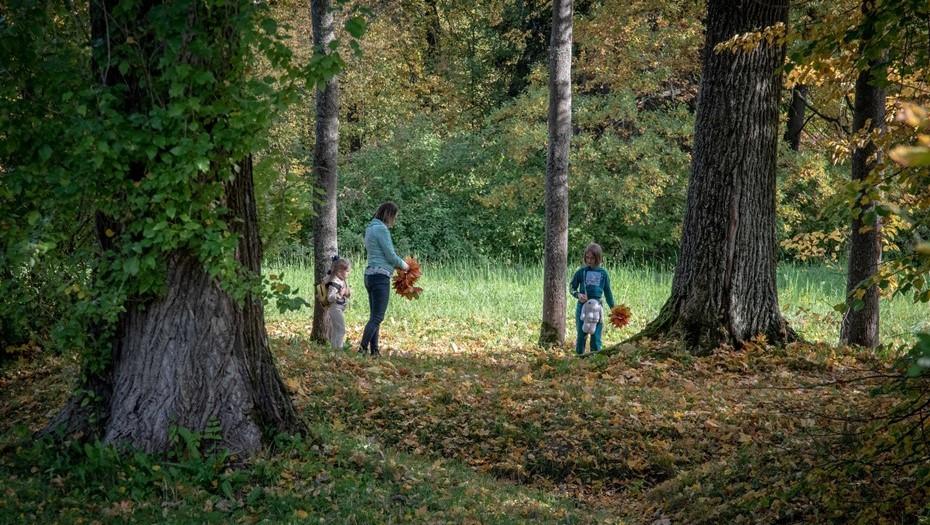 Лесные инспекторы Ленобласти выявили более 900 нарушений