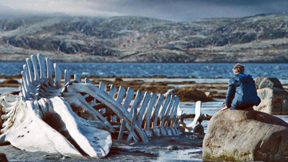 """В Териберке установят скелет кита из фильма """"Левиафан"""""""