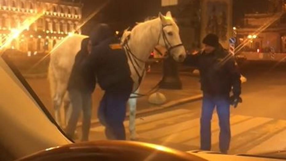 Охранники подрались с девушкой на лошади в центре Петербурга