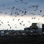 Петербург и Ленобласть начнут согласование мусорных терсхем со следующей недели