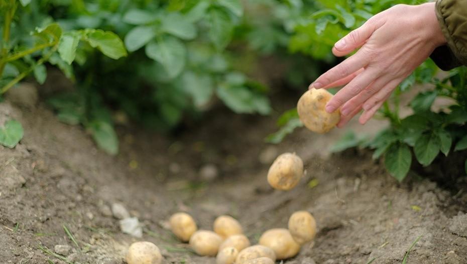 Петербург получит субсидии на развитие малого бизнеса и сельского хозяйства