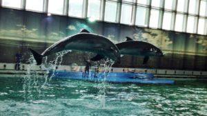 Петербуржцы протестуют против строительства нового дельфинария