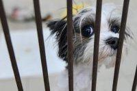 Россельхознадзору предлагают дать полномочия по проверке приютов для животных