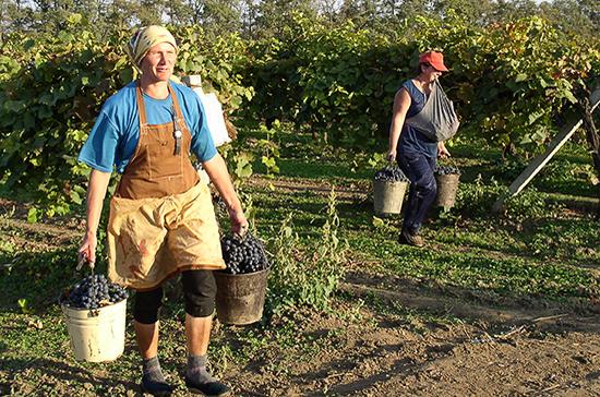 Вести федеральный реестр виноградопригодных земель будет Минсельхоз