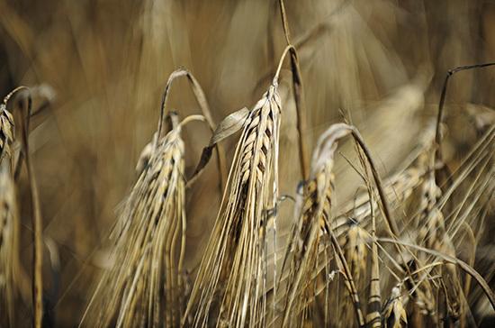 Росстат: урожай зерна в России в 2020 году составил 133,4 млн тонн