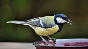 Петербуржцам рассказали, каких редких птиц можно привлечь к своему окну