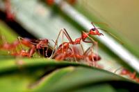 Распространение инвазивных видов животных лишило мировую экономику 1,3 трлн долларов