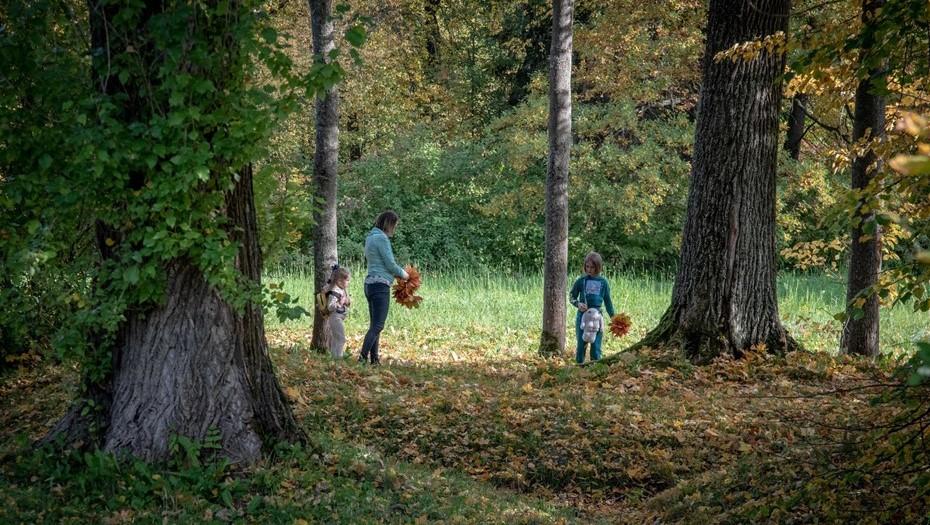 Ржевский и Муринский парки в Петербурге защитят от строительства