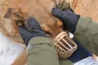 Турчак: проект о праве регионов решать судьбу бездомных животных будет отозван