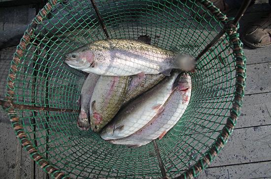 В Госдуму внесен законопроект об упразднении рыбоохранных зон