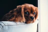 Кошкам и собакам не придётся страдать из-за долгов хозяев