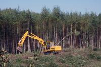 Лесоустройство в России хотят реформировать