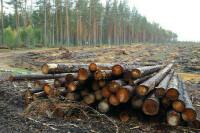 Лесоустройство в России предложили реформировать