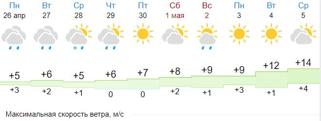 Пасмурно и прохладно будет в Петербурге в начале недели