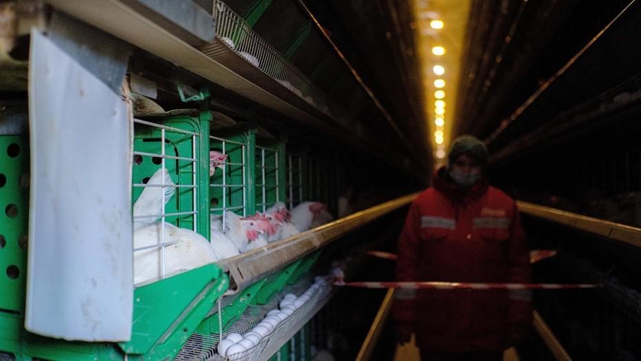 Попова рассказала о российском штамме COVID и вспышке птичьего гриппа в РФ