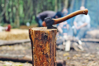 Систему лесоустройства собираются реформировать