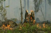 Урожай фермеров хотят застраховать от лесных пожаров