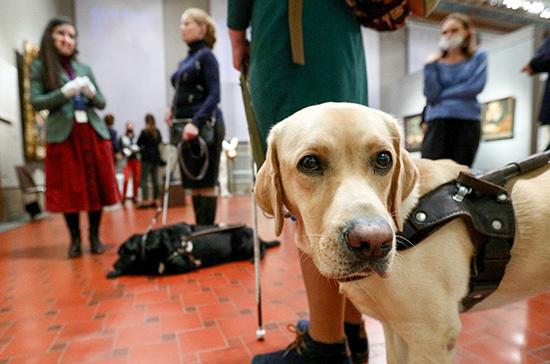 В правилах по выгулу собак могут сделать исключение для поводырей