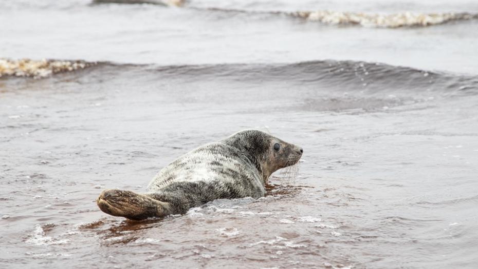 Двух тюленей вернули в Финский залив после реабилитации