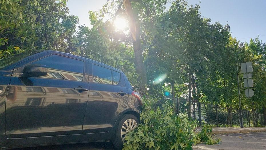 МЧС Петербурга предупредило о штормовом ветре до 20 м/с