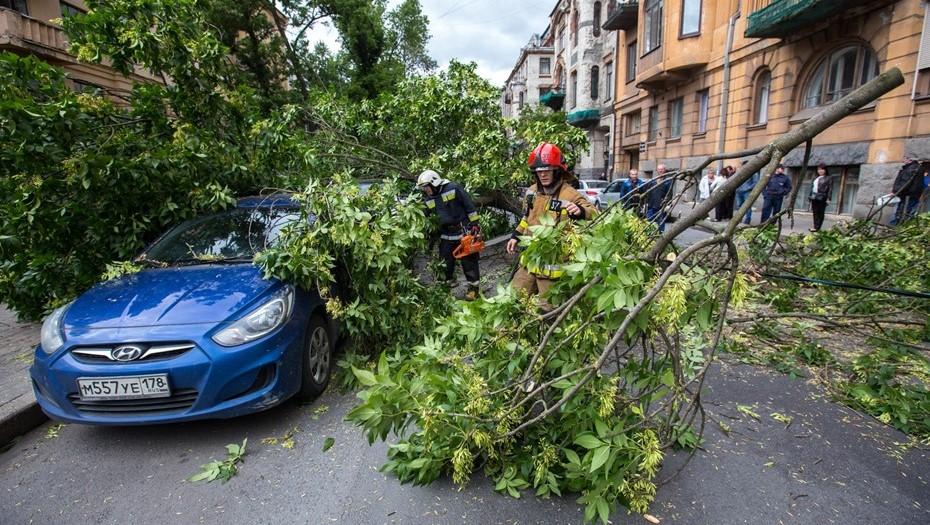 МЧС предупредило жителей Ленобласти о штормовом ветре