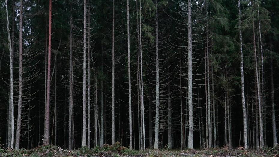 Пропавшего в Ленобласти мальчика нашли в лесу
