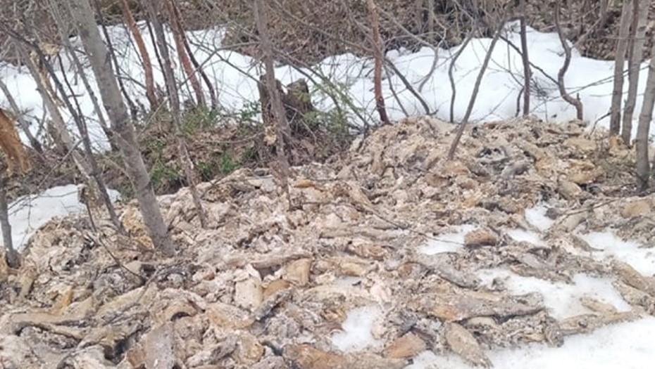 Свалку мёртвой форели обнаружили на севере Карелии