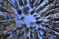 В России вводят пошлины на вывоз необработанной древесины