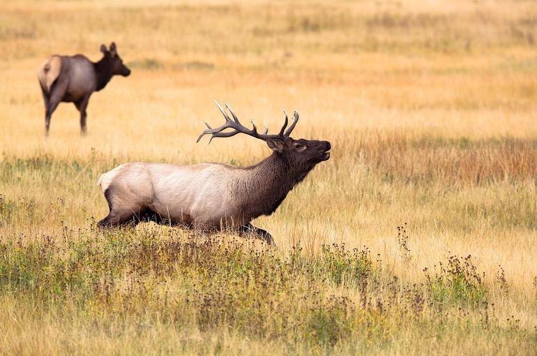 Аренду охотничьих участков можно будет продлить без аукциона