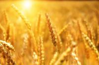 Кабмин утвердил требования к плану восстановления сельхозземель