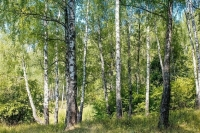 Квоты на экспорт древесины хвойных пород отменят с 2022 года