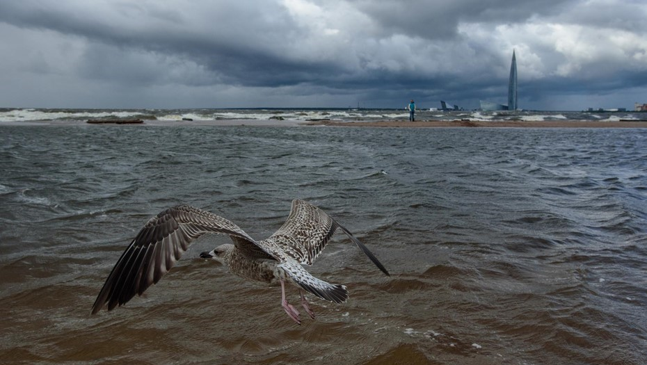 МЧС предупреждает петербуржцев об усилении ветра 15 июня