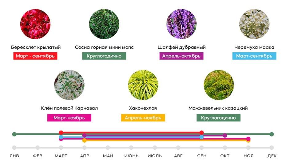 В саду, который будет радовать жителей ЖК «Принцип» круглый год, тщательно отобрано каждое растение, с учетом его периода вегетации и активного роста. Это позволяет добиться всесезонного красивого ландшафта.
