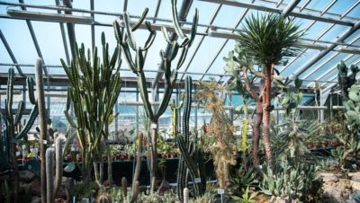 Жара вынудила Ботанический сад закрыть оранжереи для посетителей