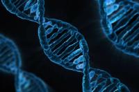 Михеева предложила сделать дешевле генетические тесты для молодых семей