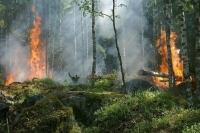 Режим ЧС в связи с лесными пожарами введен в 8 регионах
