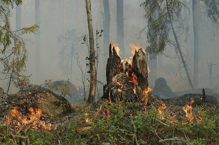 В АТОР рассказали о ситуации с лесными пожарами на турецких курортах